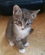 "Katze ""Melli"""