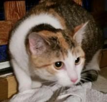 "Katze ""Elly"", 7 Monate"