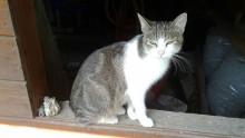 "Katze ""Gudrun"" 1 Jahr"