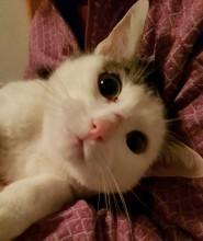 """Katze """"Christa"""""""