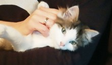 8 Katzen zu vergeben!