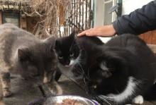 4 Katzen zu vergeben