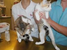 """Katzen """"Mike und Elly"""""""