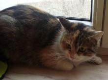 """Katze """"Minki"""" 2 Jahre"""